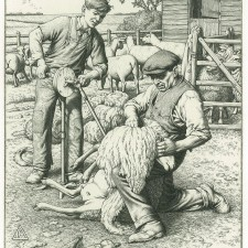 233 Sheep Shearing 1941