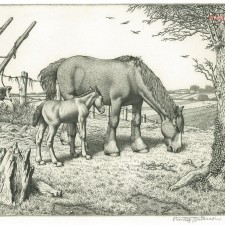 259 Daisy and Her Foal 1952